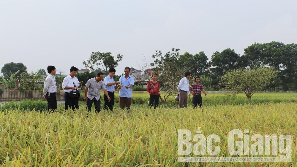 Hội Nông dân TP Bắc Giang, xây dựng mô hình điểm, Mô hình sản xuất điểm