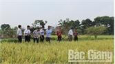 Hội Nông dân TP Bắc Giang xây dựng nhiều mô hình sản xuất điểm