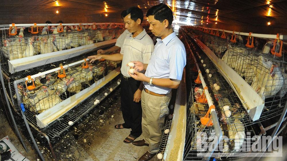 Sản xuất nông nghiệp ứng dụng công nghệ cao: Tăng nhanh mô hình, sản phẩm chất lượng