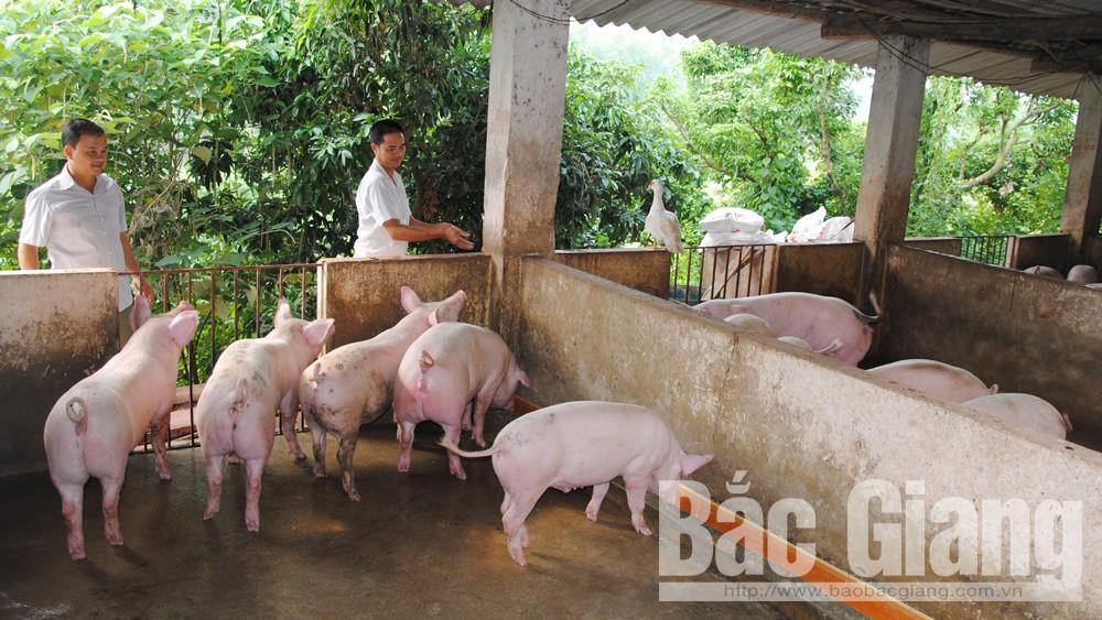 Tỉnh Bắc Giang cấp 15 nghìn liều vắc xin lở mồm long móng và 300 lít hóa chất dự phòng cho 2 huyện Hiệp Hòa và Yên Thế