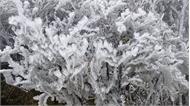 Tháng 1-2019, các tỉnh, thành phía Bắc ảnh hưởng 3-5 đợt không khí lạnh