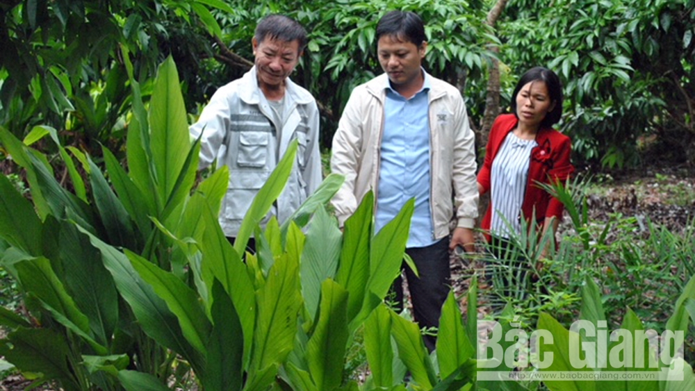 xã Phúc Hòa, Tân Yên, trồng nghệ, vải thiều, Trần Văn Định