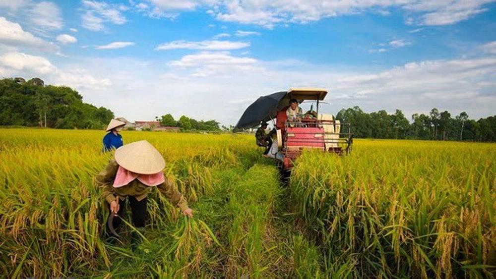 Department of Crop Production, cultivation sector, cassava industrial plants, lemon, mango, grapefruit, longan, MARD Deputy Minister, Le Quoc Doanh, maize farms