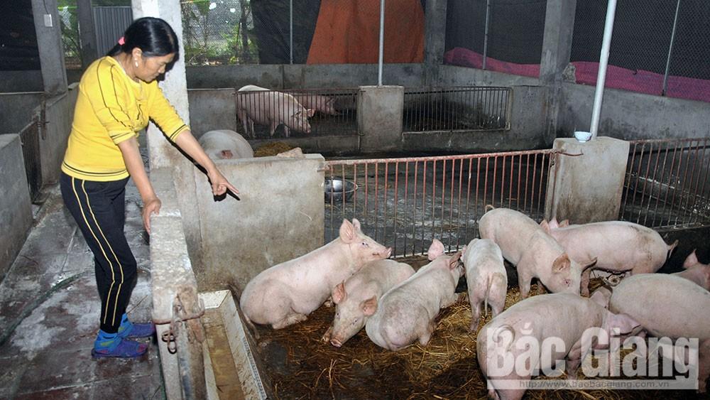 Quản lý, đàn vật nuôi, ổ bệnh, dập dịch