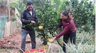 Tiếp sức cho nông dân thoát nghèo