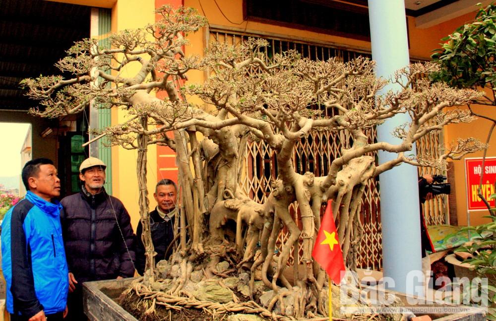 Huyện Hiệp Hòa, vườn cây bạc tỷ, Lão nông huyện Hiệp Hòa có vườn cây bạc tỷ.