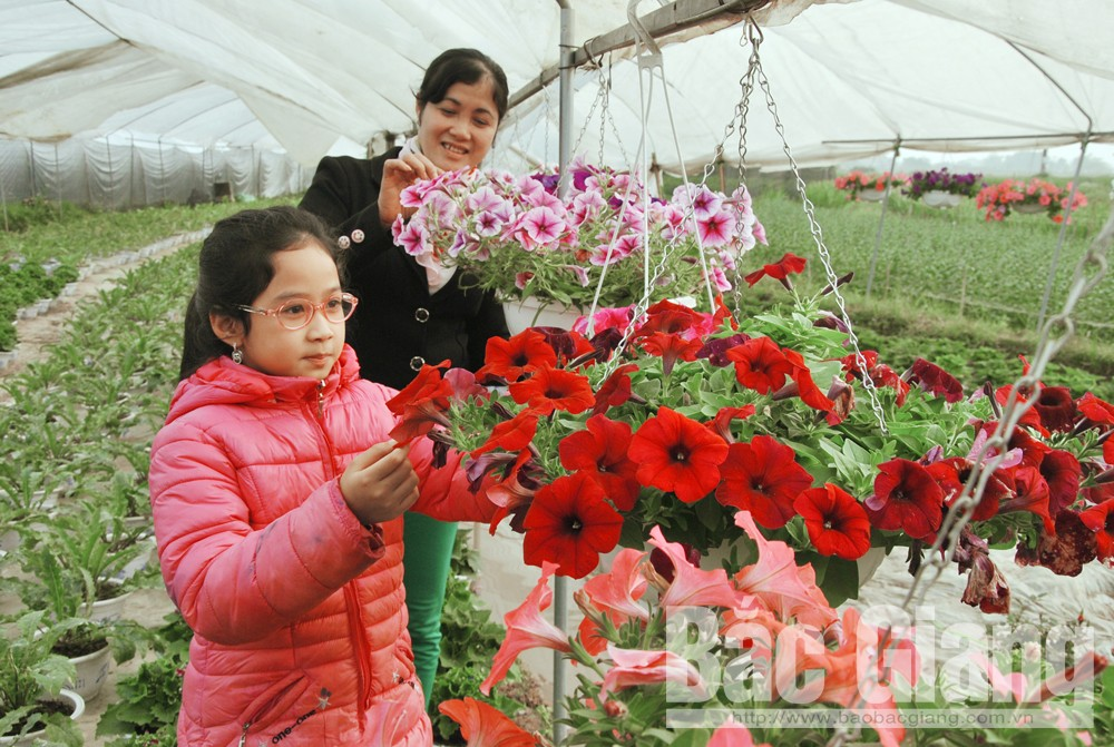 Hoa xuân bắc giang, rộn ràng hoa xuân