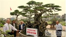 Hai cây cảnh tiền tỷ của nhà vườn Bắc Giang