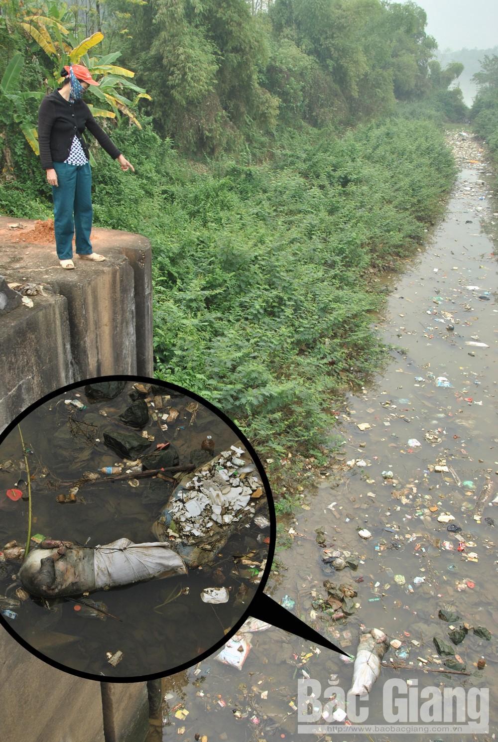 Cần xử lý dứt điểm tình trạng vứt rác, xác động vật xuống lòng kênh Chính, Tân Yên, xác lợn chết