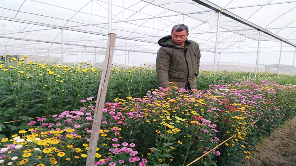 Về vùng chuyên canh nông sản chất lượng cao Dĩnh Trì ngày giáp Tết