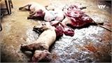 """Lợn lở mồm long móng được """"phù phép"""" thành thịt trâu gác bếp thơm ngon"""