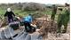 Bắt giữ và tiêu hủy 1,1 tấn nầm lợn nhập lậu không rõ nguồn gốc