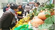 Quảng bá trái cây Lục Ngạn tại Hà Nội