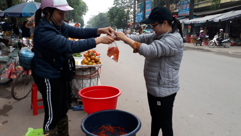 Cá chép cúng Tết ông Công, ông Táo hút khách