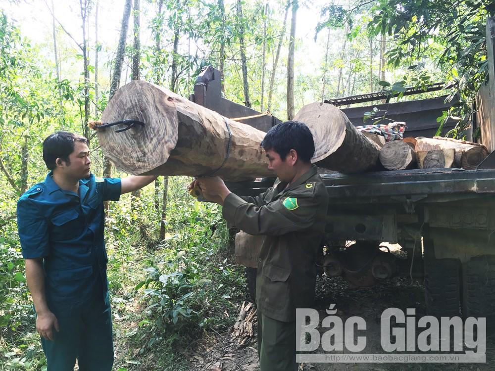 Phá rừng tự nhiên tại huyện Sơn Động, phá rừng Sơn Động Bắc Giang