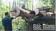 Phá rừng tự nhiên tại huyện Sơn Động
