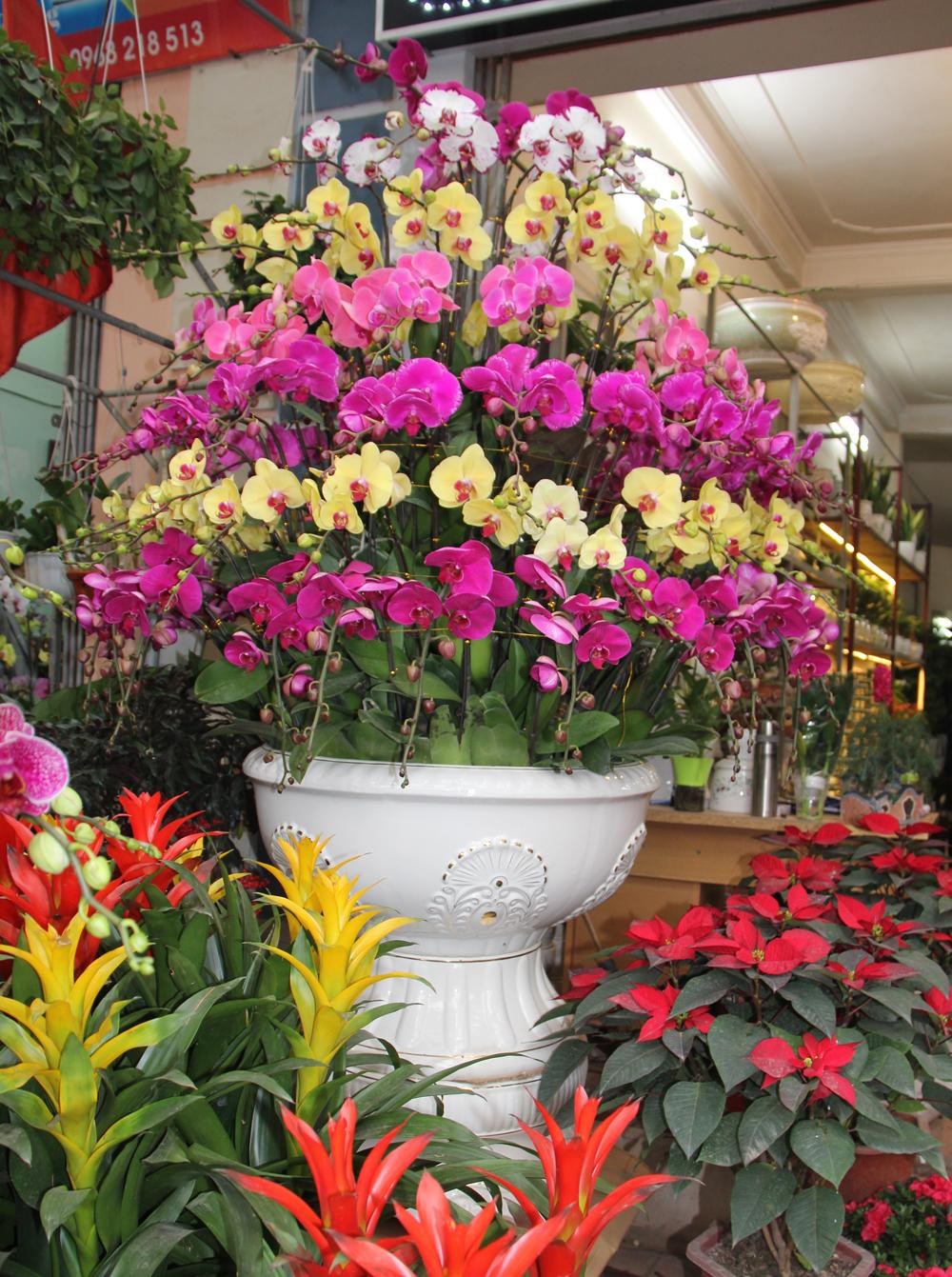 Hoa, cây cảnh, đào, quất thế, bưởi cảnh, xuống phố, lan, mai vàng, mai đỏ, mai trắng