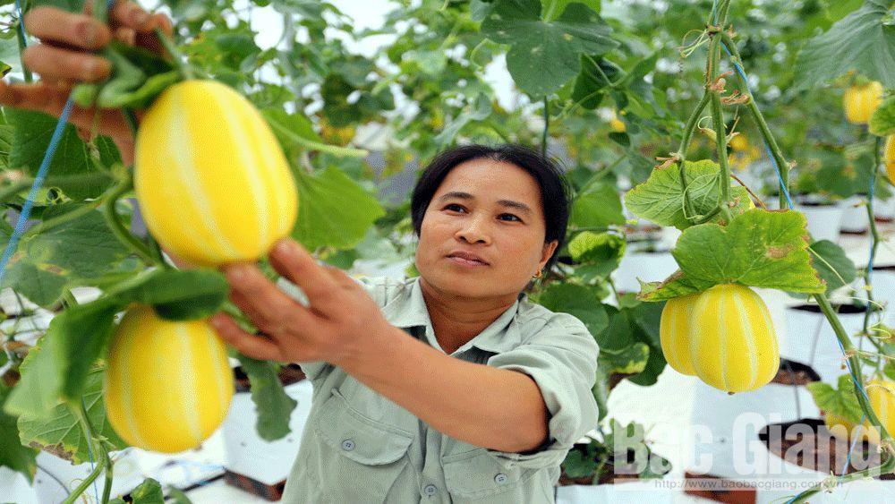 Hiệp Hòa, công nghệ cao, sản xuất nông nghiệp, nông dân 4.0, Bắc Giang