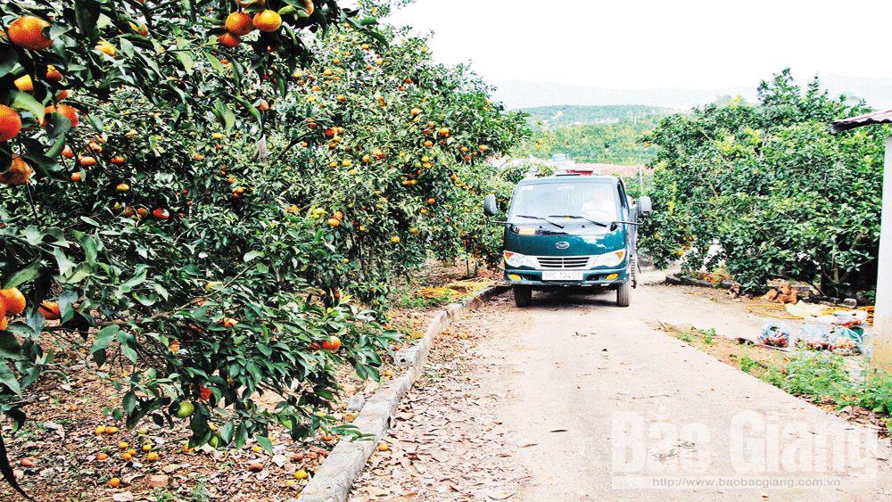 thôn Đồng Quýt, Lục Ngạn, Bắc Giang, xã Tân Mộc, cây ăn quả