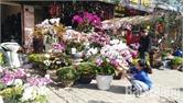 Nhộn nhịp thị trường hoa, cây cảnh ngày Tết