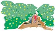 Trong vườn cam Canh Lục Ngạn