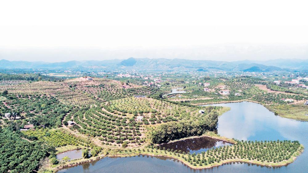 Huyện Lục Ngạn, đất đai, khí hậu, địa phương, Lục Ngạn, vùng cây ăn quả