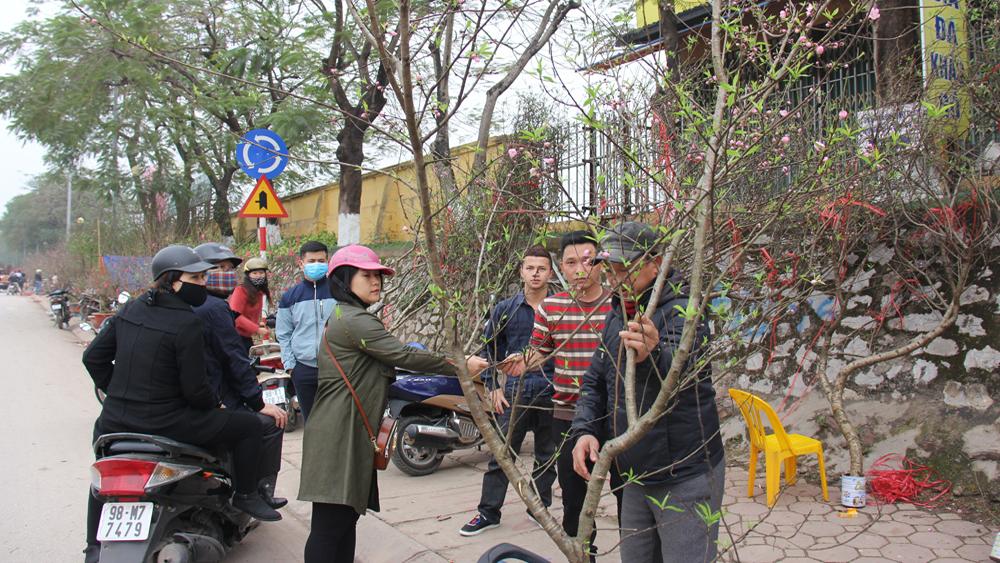 Hoa, cây cảnh ùn ùn xuống phố