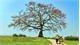 6 cây cổ thụ trăm tuổi vào danh sách Cây Di sản Việt Nam