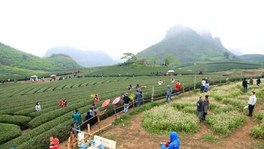 Planning scheme, Moc Chau national tourist site, Son La province, Various tourism types,  eco-tourism, cultural tourism, resort tourism