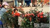 Thị trường cây cảnh ở Hiệp Hòa-Đa dạng kiểu dáng, giá cả phù hợp