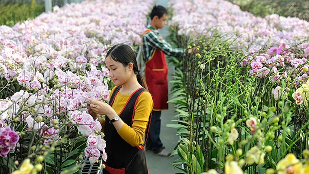 Application of science and technology, flower growing, hi-tech farming, agriculture cultivation, economic development