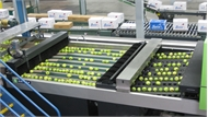 Hệ thống tự động phân loại táo siêu tốc
