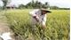 No degree, no problem for this rice innovator