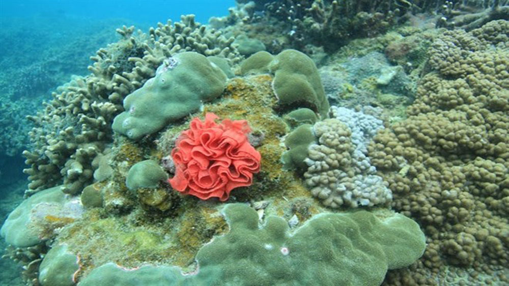 Coral reefs, Cham Island, Maritime Protected Area, pilot project, survival ratio, rapid restoration, tropical forests