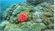 Coral reefs restored off Cham Island