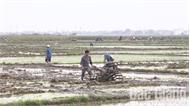 Lao động sản xuất đầu năm: Nông dân nhộn nhịp xuống đồng