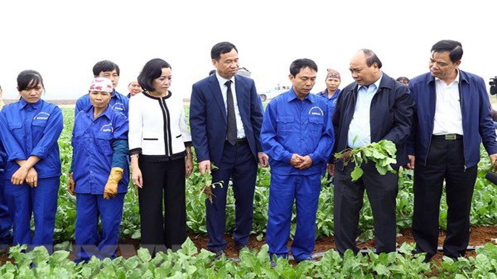 Prime Minister, application of technology, agricultural production, upper-middle-income country, Vietnam's modern agriculture, agricultural sector, domestic demand, high-tech agriculture