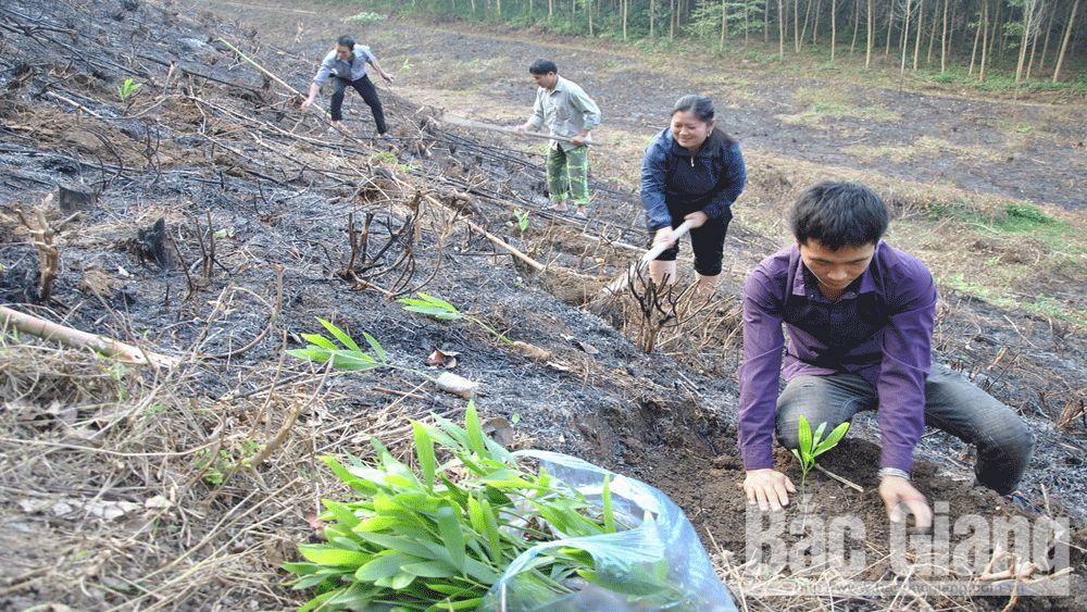 Yên Thế hướng tới thâm canh rừng gỗ lớn