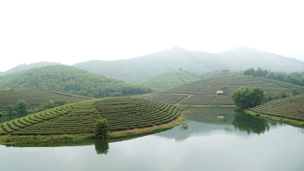 A rare boat cruise through tea estate islands in Vietnam