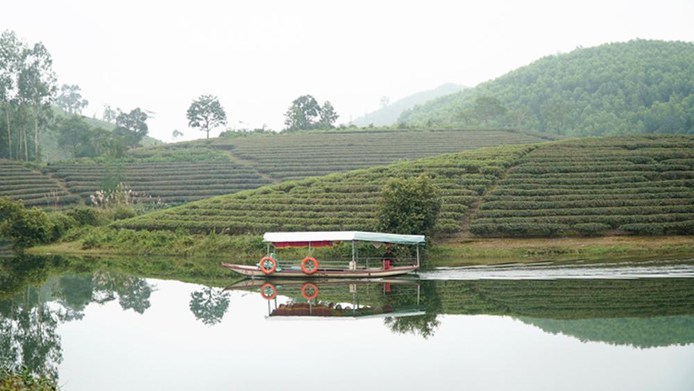A rare boat cruise, tea estate islands, Vietnam, green tea islands, small peninsula, Thanh Chuong tea hills,  tea gardens, tea plants, Thai ethnic minority