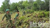 Bắc Giang: Nhiều khu vực nâng mức cảnh báo cháy rừng cấp cực kỳ nguy hiểm