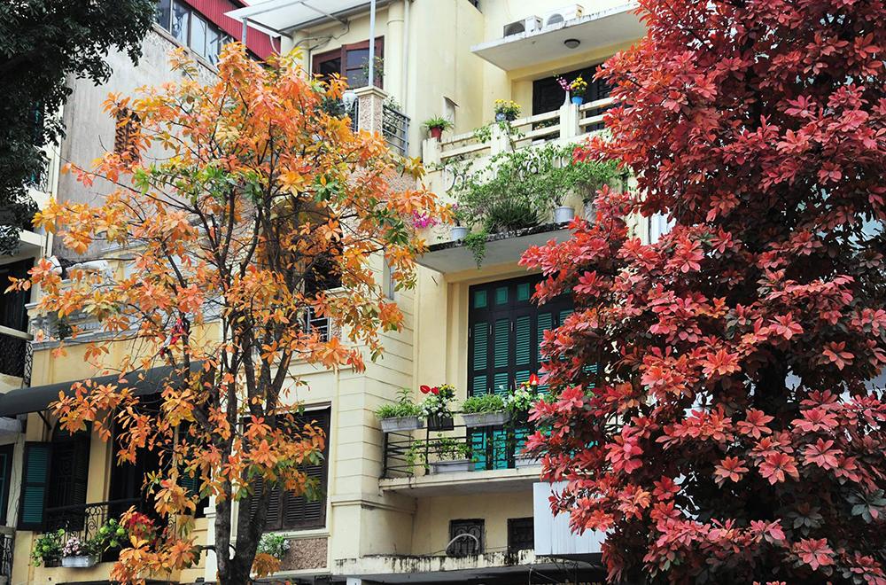 Poetic Hanoi, yellow-leaves-streets, hottest destination, beautiful landscape, Vietnamese capitl