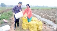 Yên Dũng nhân rộng mô hình HTX nông nghiệp