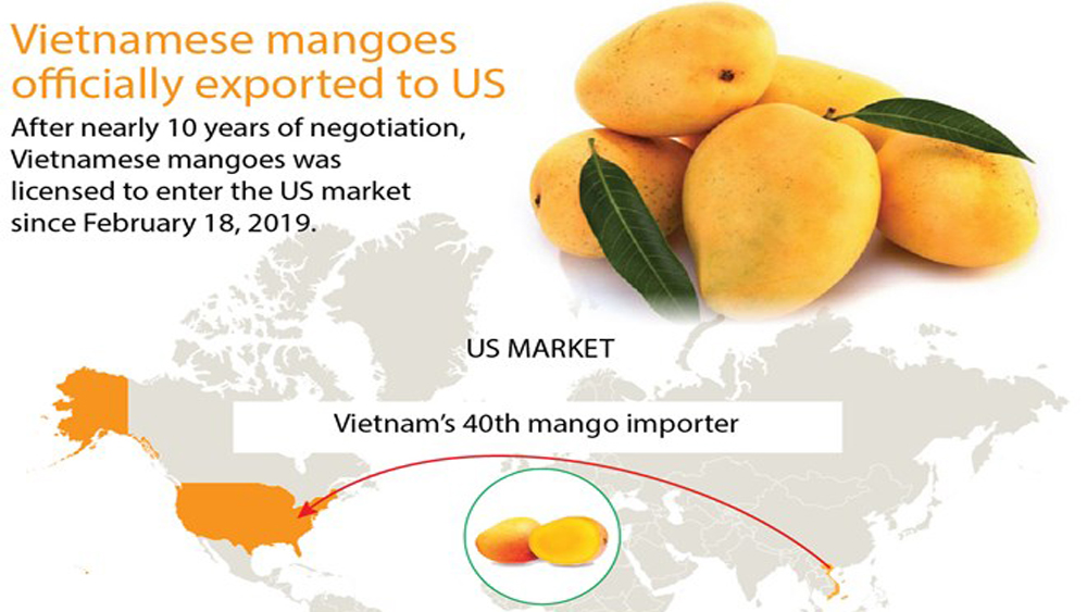 Mangoes officially exported to US