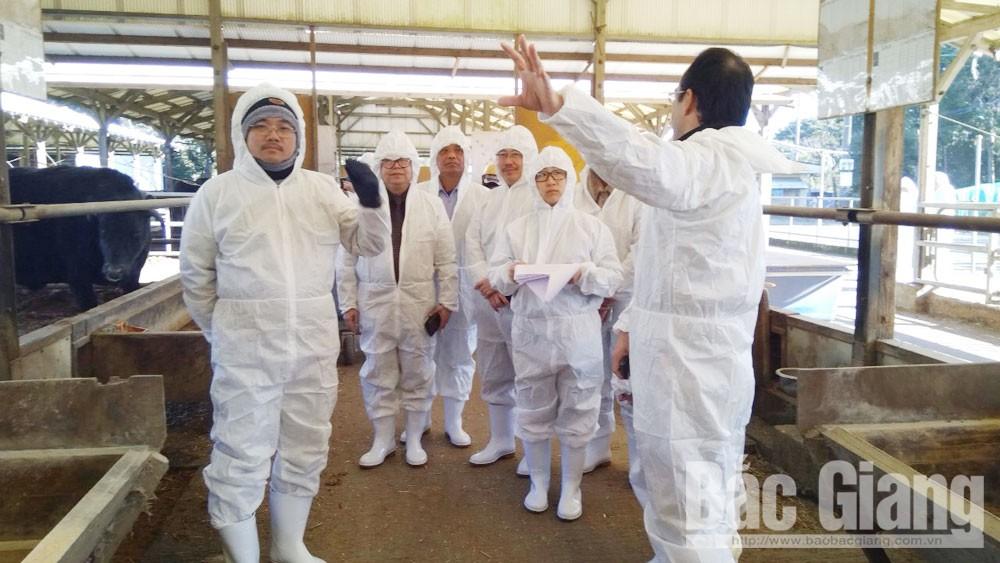 Kinh nghiệm sản xuất nông sản theo chuỗi tại Nhật Bản
