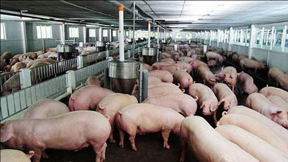 Thủ tướng Chính phủ chỉ đạo cấp bách khống chế dịch tả lợn châu Phi