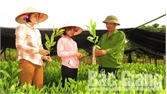 Chuẩn bị gần 2 triệu cây giống cho trồng rừng