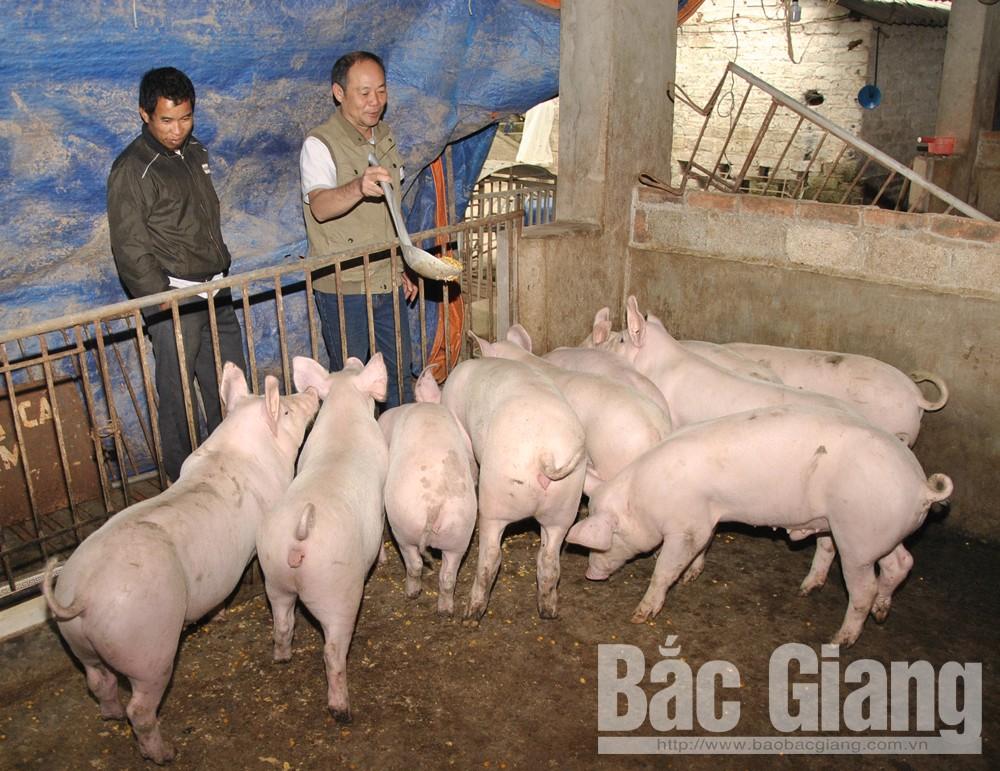 Các chủ nuôi cần thực hiện các biện pháp chăn nuôi an toàn để phòng tránh dịch bệnh.