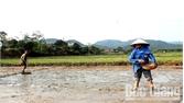 Sơn Động: Phấn đấu gieo trồng 3.500 ha cây trồng vụ chiêm Xuân