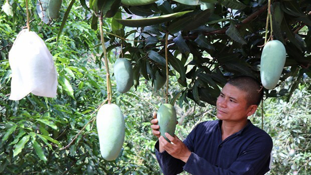 Vietnam, quality of farm produce, choosy markets,  export revenue,  agricultural products,  technical standards, high-end markets
